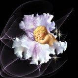 Angel & flower