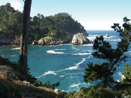 point-lobos1