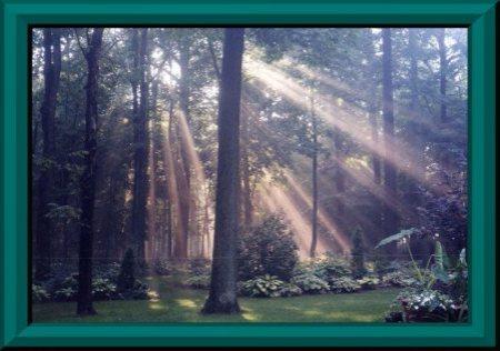 sherwood-forest II